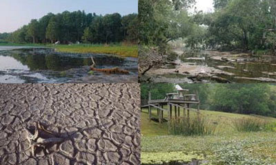 drought collage